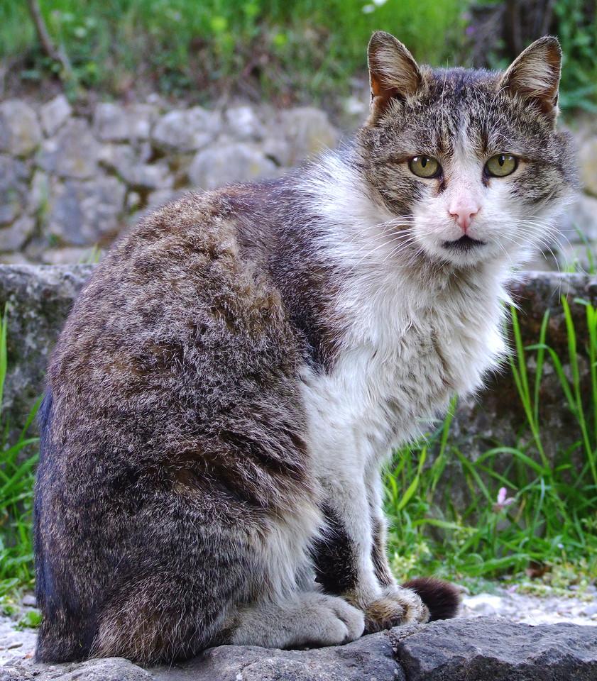 cat-1399848-1280x960